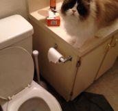 Didn't Even Flush