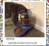 Cat Food Device Fail