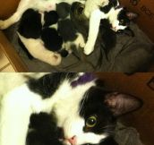 Mother Cat Realization
