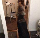 A Particular Guard Dog