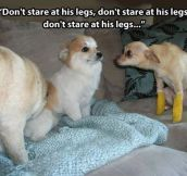 You Got New Legs Lt. Dawg
