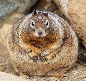 This Fat Squirrel