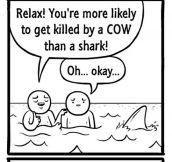 Don't Be Afraid Of Shark