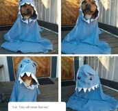 The Rare Dog-Shark
