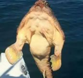This Fish Lifts