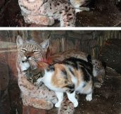 Cats Will Be Cats No Matter Their Size