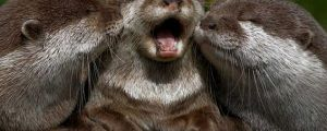 A Dose Of Laughing Animals To Brighten Your Day…