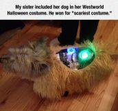 Pet Trick-Or-Treating