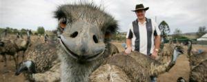 25 Hilarious Animal Photobombs