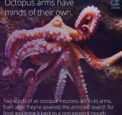 The Octopus Is An Interesting Creature