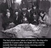 The Last Photo Ever Taken Of Hachiko