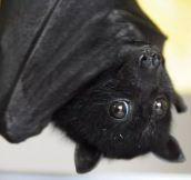 Bats Can Be Cute Too