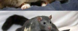 Cat And Mice Love