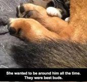 This Cat's Reaction Is Heartbreaking