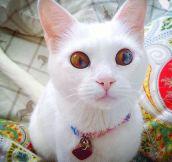 The Best Kitten Eyes I've Ever Seen