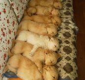 Cuteness In A Row