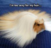 Looks Like A Guinea Wig