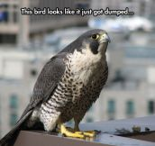 Depressed Bird Of Prey