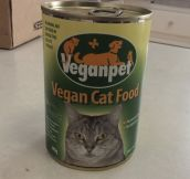 What Cats Think Of Vegan Food