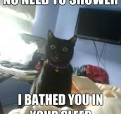 Overly-Attached Feline
