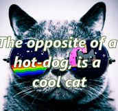 The Opposite Of Hot Dog