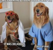 The New Dogtors In Town
