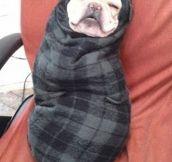 Never Let Me, Blanket
