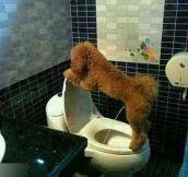 Potty Trained Dog