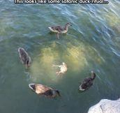 A Pagan Duck Ritual