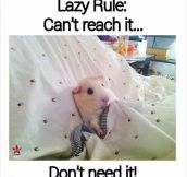 Lazy Rule No. 1