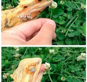 Cute Dragon Loves Flowers
