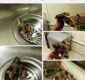 Frog Camo Unlocked