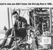 The First Pig To Fly