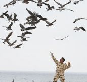 Bread Man Vs. Seagulls