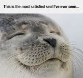 Satisfied Seal Of Approval