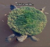 Real Life A'tuin