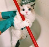 Gorgeous Cat Getting Ready For A Bath