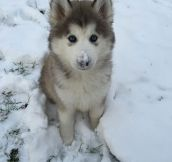 Fluffiness Meets Winter
