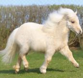 Look At This Cute Pony