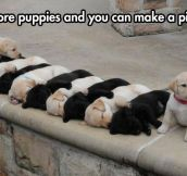 Puppies Everywhere