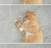 Cat Smelling Dandelion