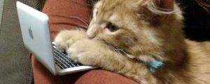 On The Internet No One Knows You're A Cat