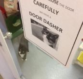 Careful With The Door Dasher