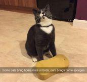Venus, The Chimera Cat ,