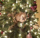That Ornament Looks Strange