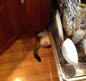 Dishwasher Helper
