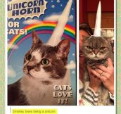 Cats Love Being Unicorns