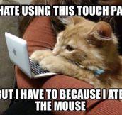Cyber Cat Problems