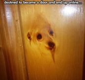 It's A Doggy Door