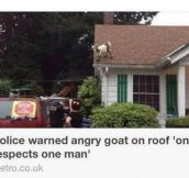 The Greatest Headline Ever Written